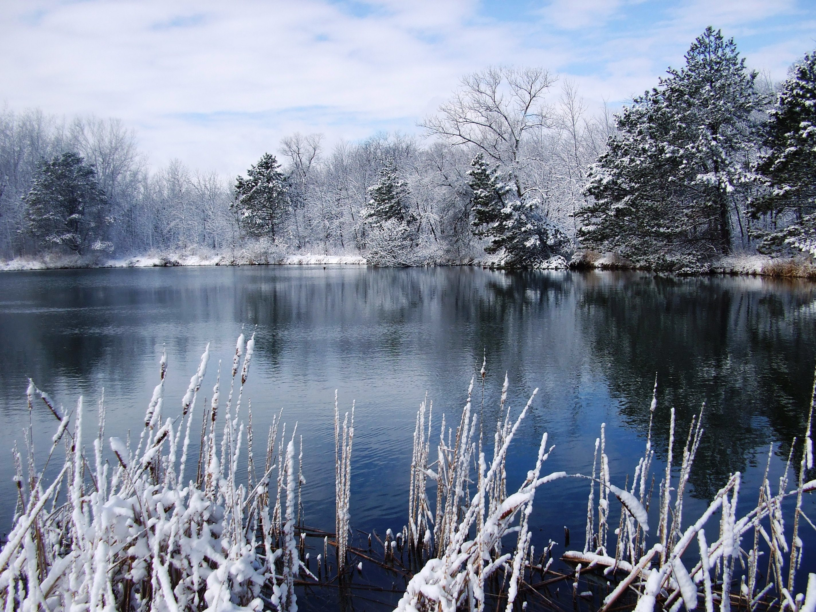 We say goodbye both to the beauty and the perseverance of this recent winter. Photo: Dave Giese, Fermilab Natural Areas