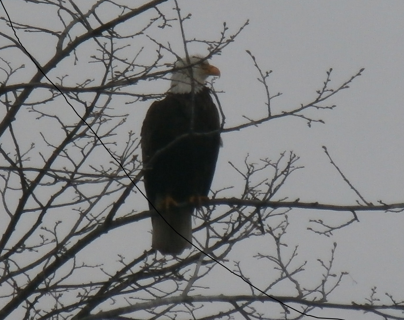 Drue Wallace, AD, spotted this eagle looking out over the pond in front of Wilson Hall. Luckily, a co-worker was nearby to snap the photo. Photo: Jamie Clemons, AD
