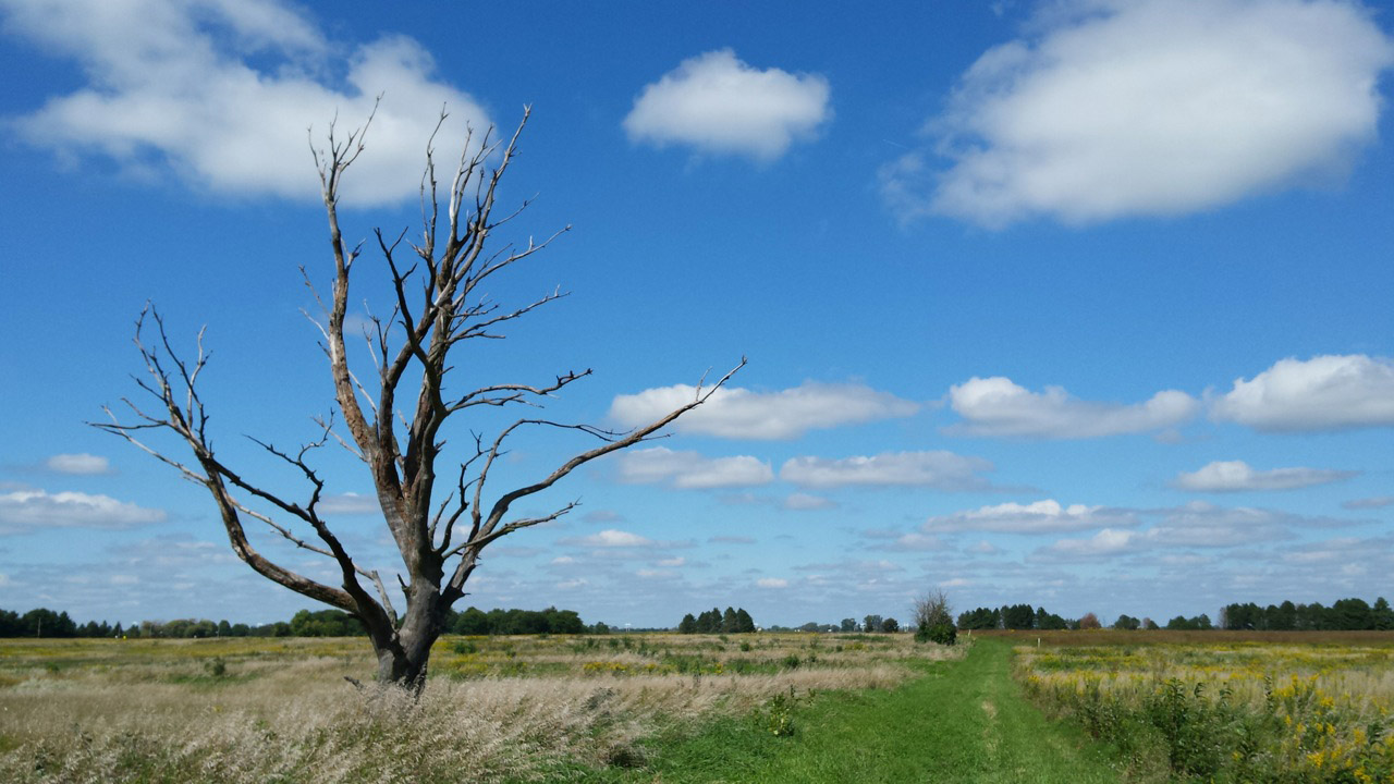 A bare tree stands alone in the green fields of the dog training area. Photo: Lauren Biron, Office of Communication