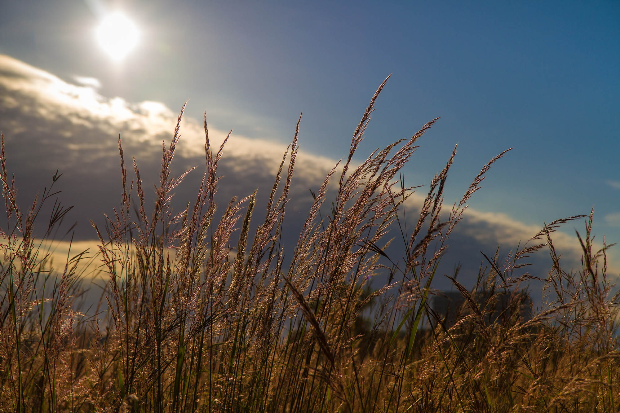 The morning light in the prairie grasses is beautiful these days. This shot was taken from the access road that connects the eastbound and westbound parts of Pine Street just east of the guard station at Kirk Road. Photo: Elliott McCrory, AD