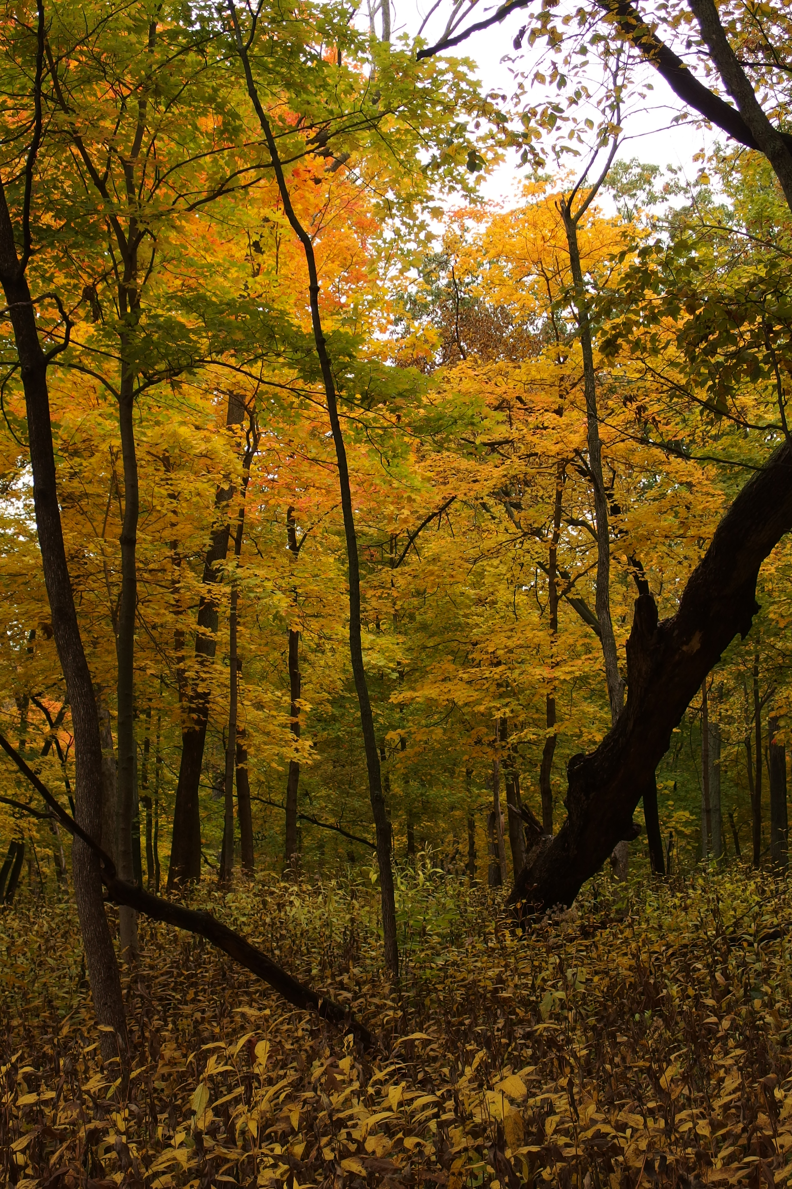 The woods on Pine Street near the Lederman Science Center are peaceful in fall. Photo: Dan Munger, AD