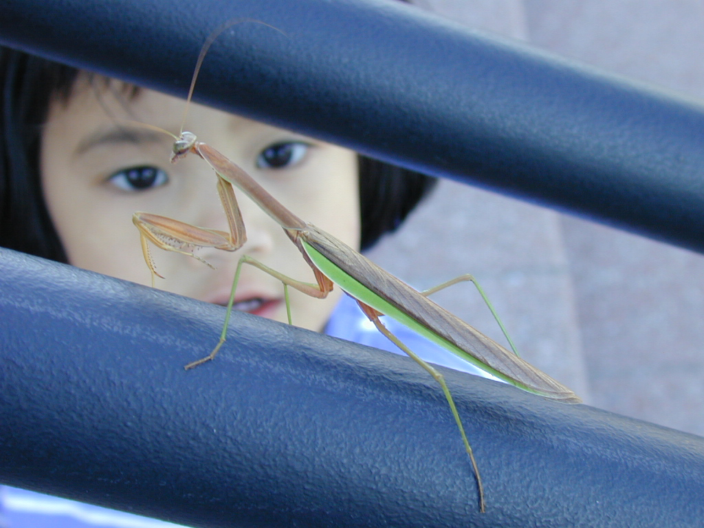 It's Throwback Thursday. Sept. 3, 2002: Lily Witherell, daughter of former Fermilab Director Mike Witherell and Beth Witherell, spots a praying mantis on the steps of Wilson Hall. It was her third birthday. Photo: Beth Witherell