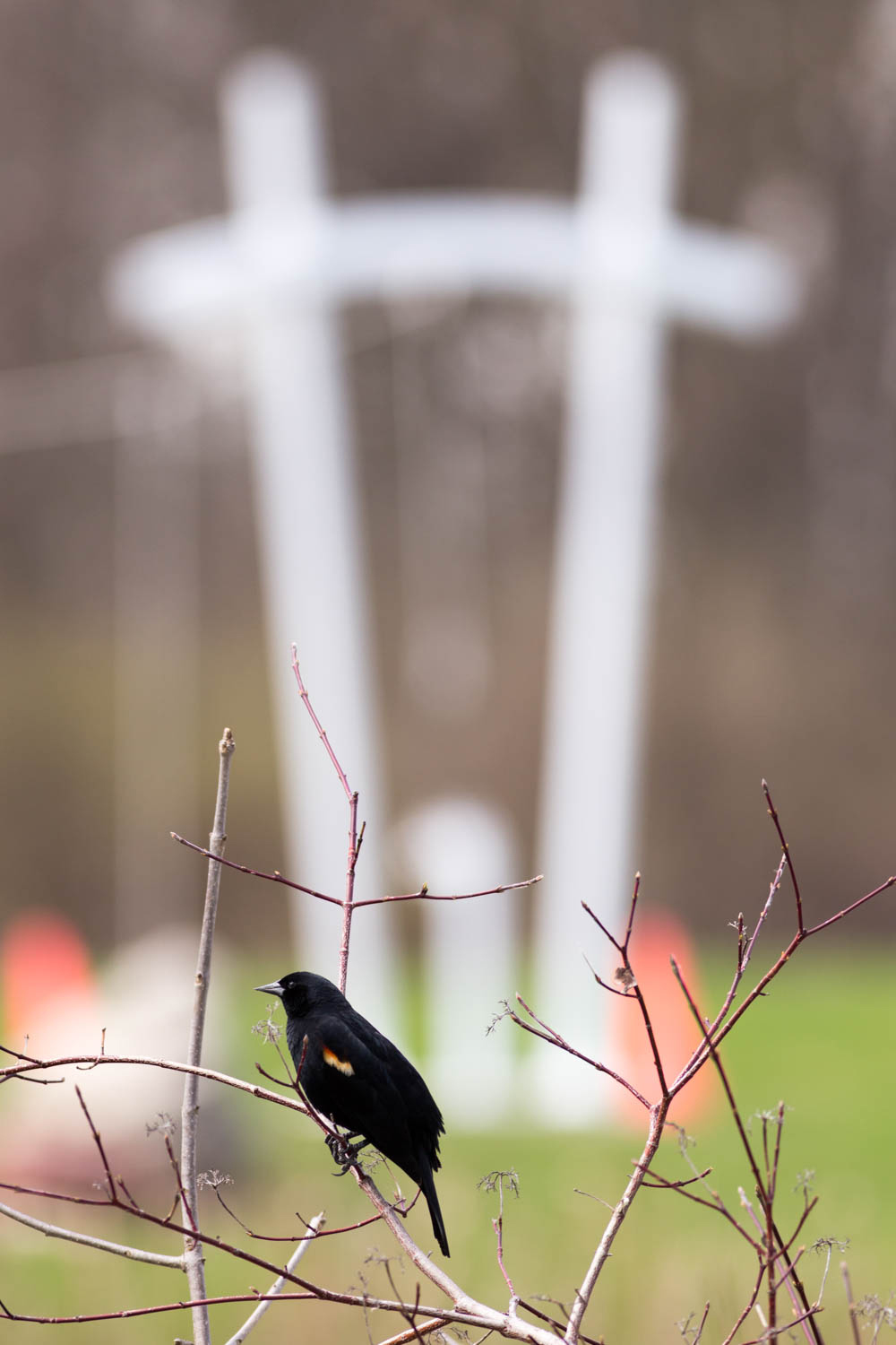 The playground pi poles at Lederman Science Center are visible behind a red-winged blackbird. Photo: Jesus Orduna, Brown University