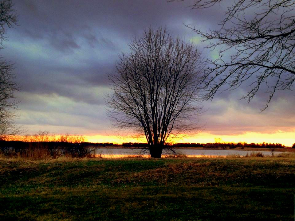 A leafless tree stands stark against the sunset by Lake Law. Photo: Sudeshna Ganguly, University of Illinois at Urbana-Champaign