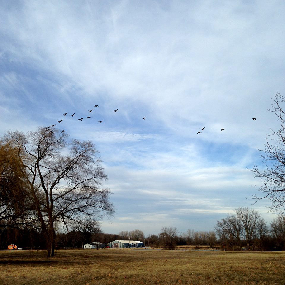 Birds fly over the Fermilab Village. Photo: Sudeshna Ganguly, University of Illinois at Urbana-Champaign