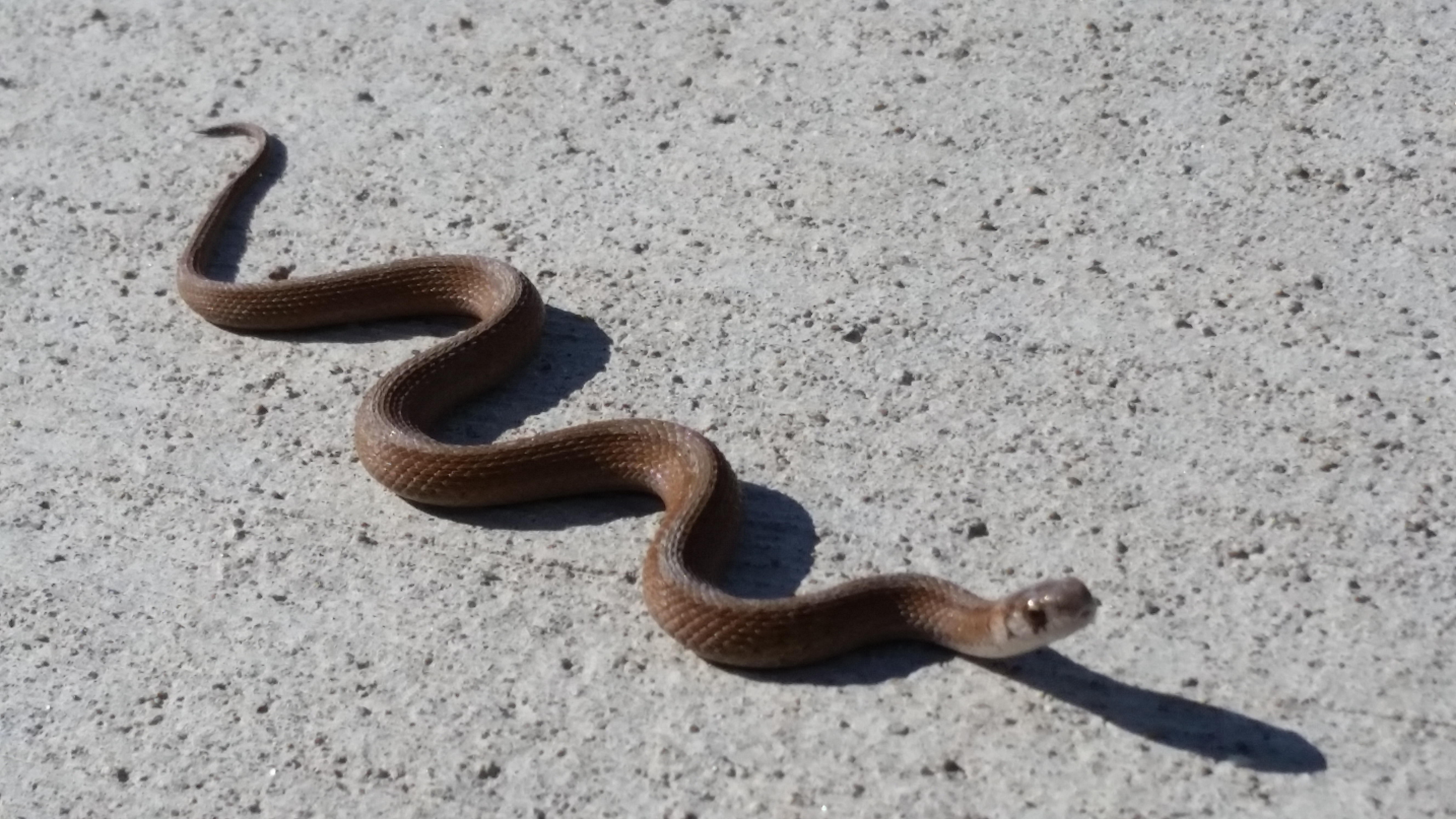 A snake wriggles away near the IARC Office, Technical and Education Building. Photo: Aaron Sauers, OPTT
