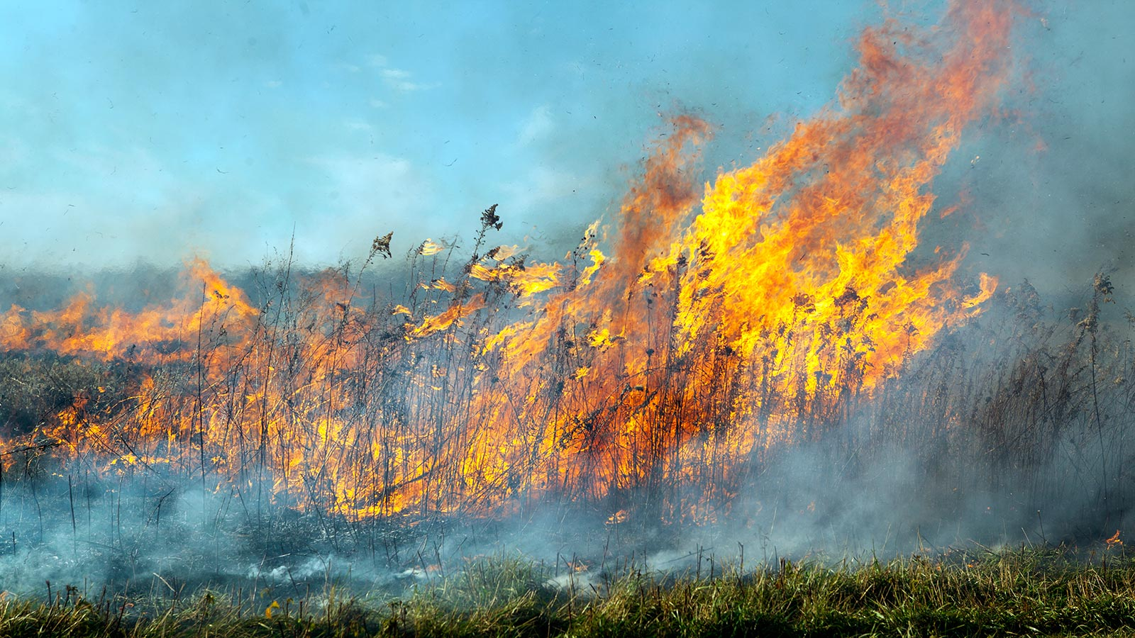 Controlled burns help restore the natural prairie habitat. Photo: Marty Murphy