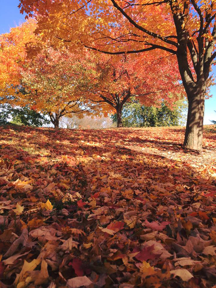 Fallen leaves cover the ground. Photo: Nitin Yadav, Indian Institute of Technology–Kandur