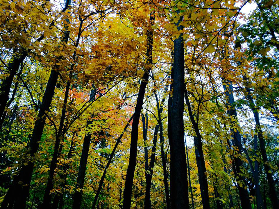 Fermilab woods are golden for a brief moment. Photo: Nitin Yadav, Indian Institute of Technology-Kandur