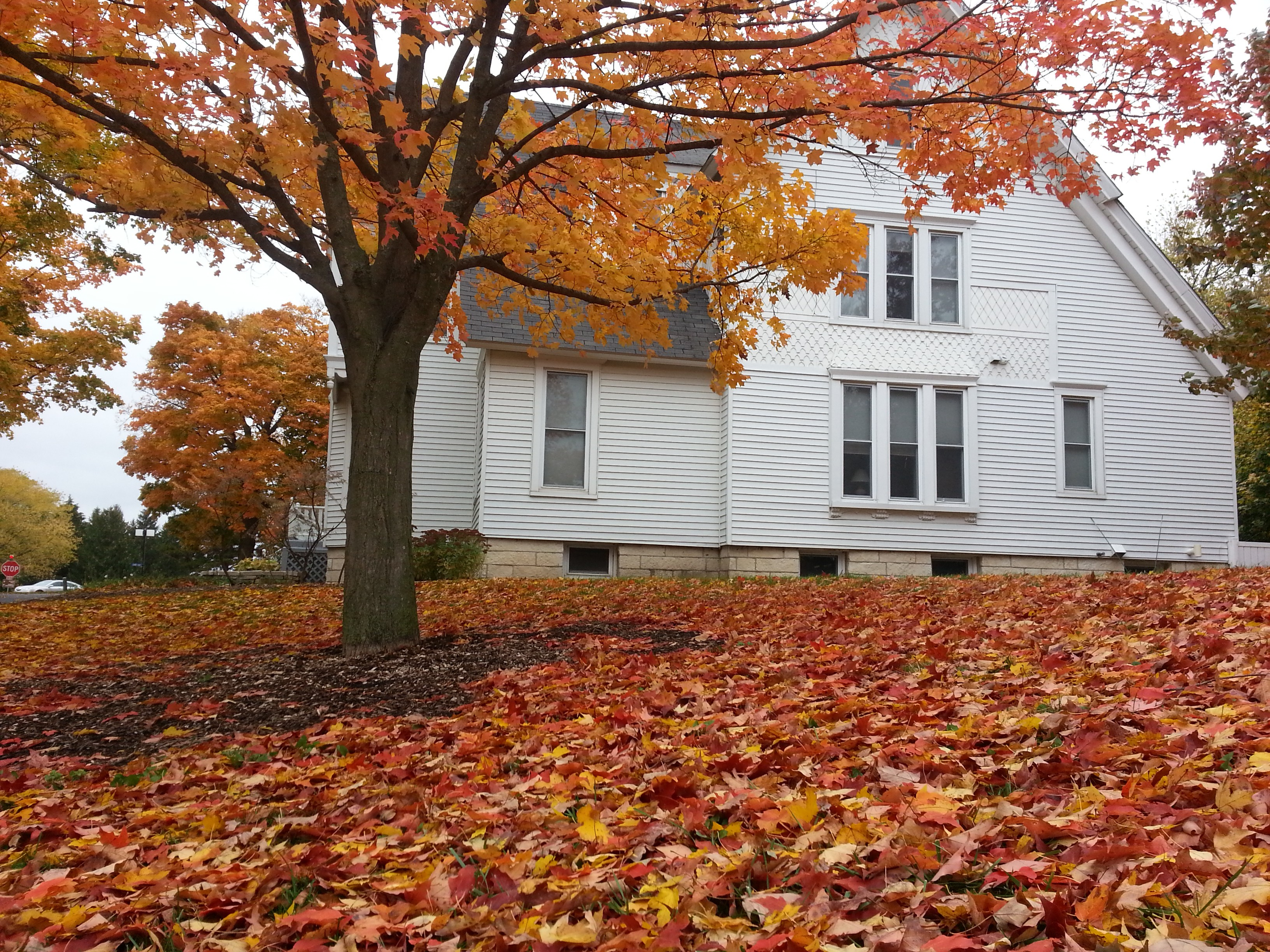 Throwback to October: A Fermilab village home is surrounded by fallen leaves. Photo: Tapasi Ghosh, Federal University of Goias