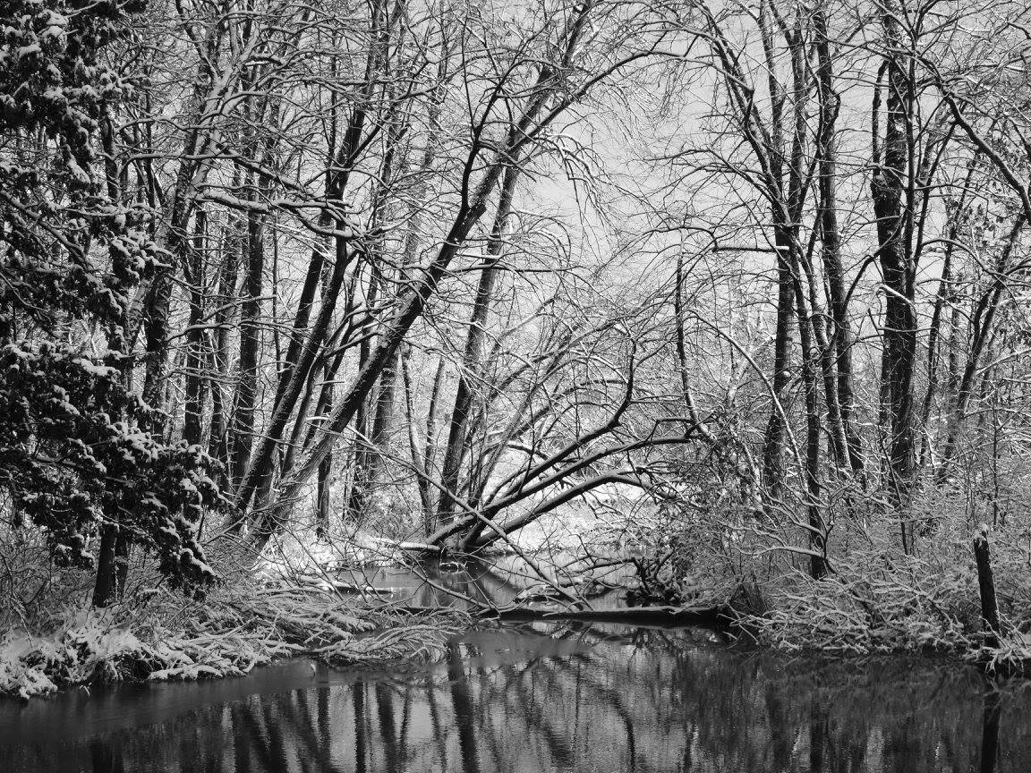 Snow-covered branches and twigs reach over the water near the Lederman Science Center. Photo: Amy Scroggins, Abri Credit Union
