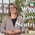 Why I Love Neutrinos - Angela Fava