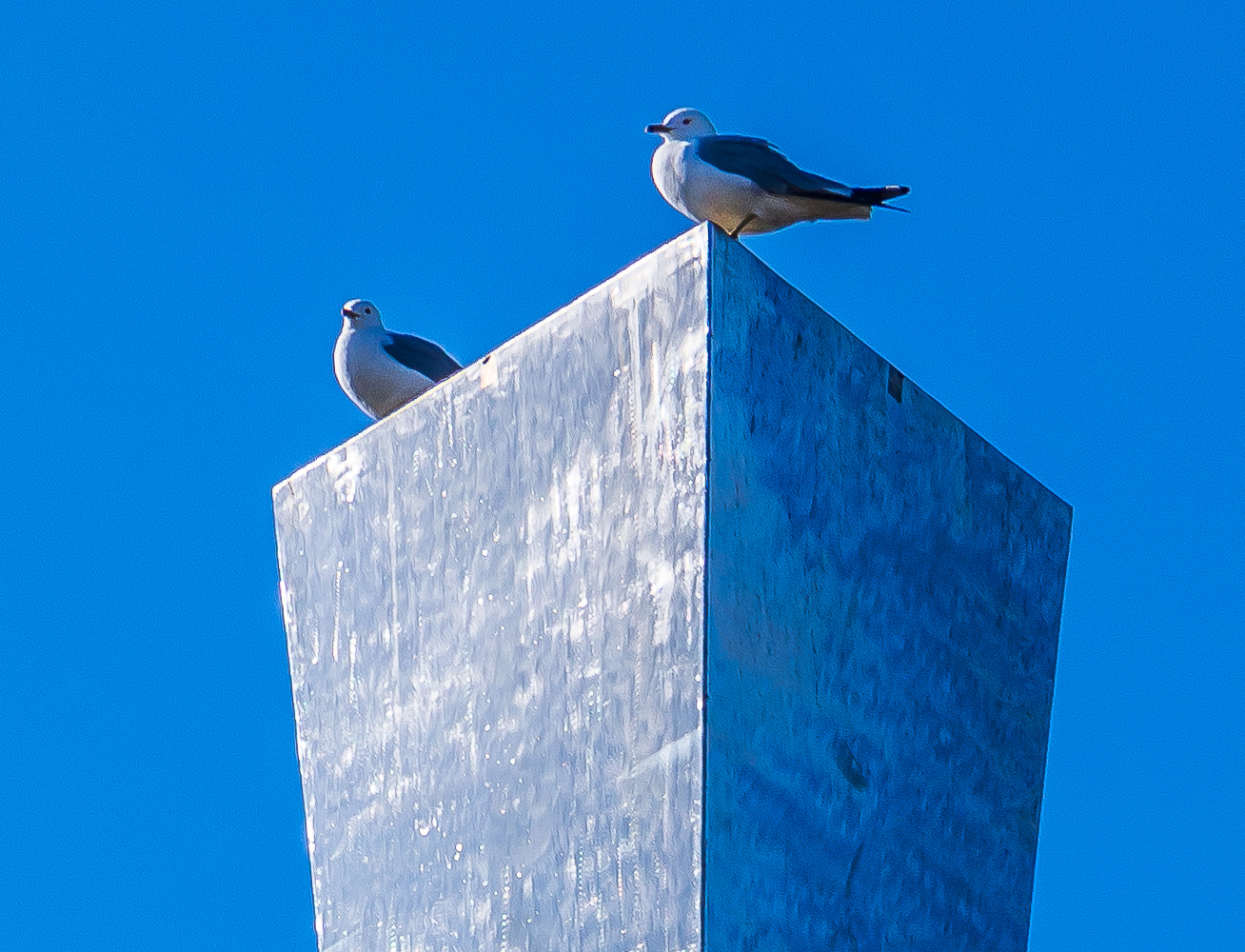 """Birds hang out on the corners of the hyperbolic obelisk, titled """"Acqua Alle Funi,"""" in front of Wilson Hall. Photo: Elliott McCrory, AD"""