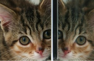 "This kitten, seen in the mirror, is just a little different, due to the dark spot on her nose. She is almost, but not exactly, ""P-even."" If the reflection is replaced with the reflection of the same kitten but composed of antimatter, she would be CP-even."