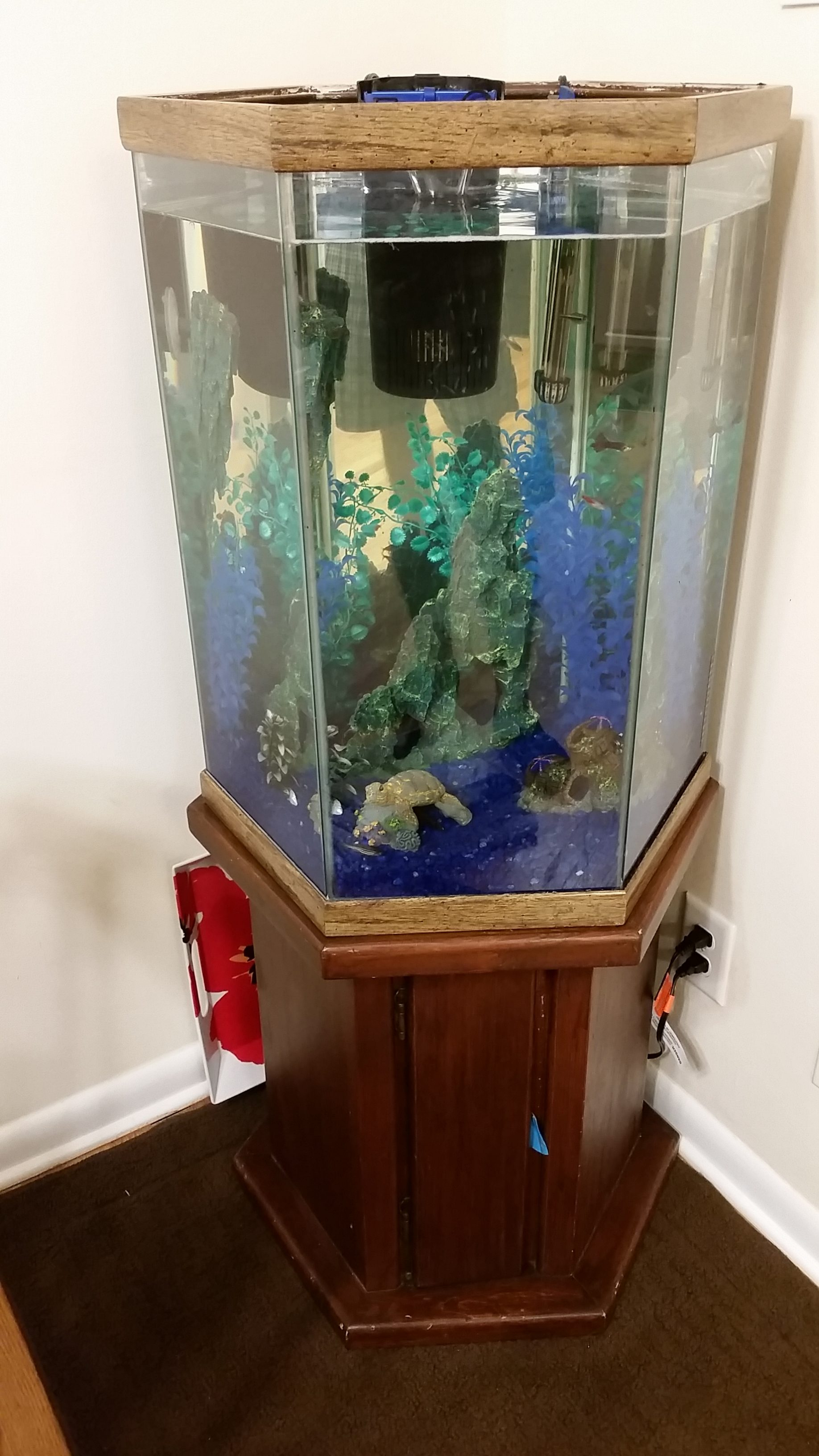 27 gallon hexagon aquarium hood 1000 aquarium ideas for Hexagon fish tank with stand