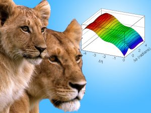 For complex collisions involving the nuclei of lead atoms, scientists look for correlations between the particles created in the collision. This is akin to trying to study how knowing the location of one lion in a pride tells you about the location of others.