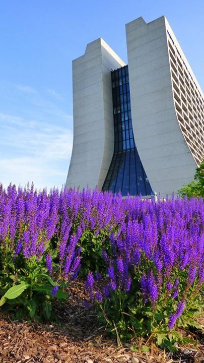 Wilson Hall is set off very nicely by ornamental lavender. Photo: Amy Scroggins, Abri Credit Union