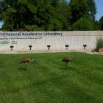sandhill crane, crane, bird, nature, animal, wildlife
