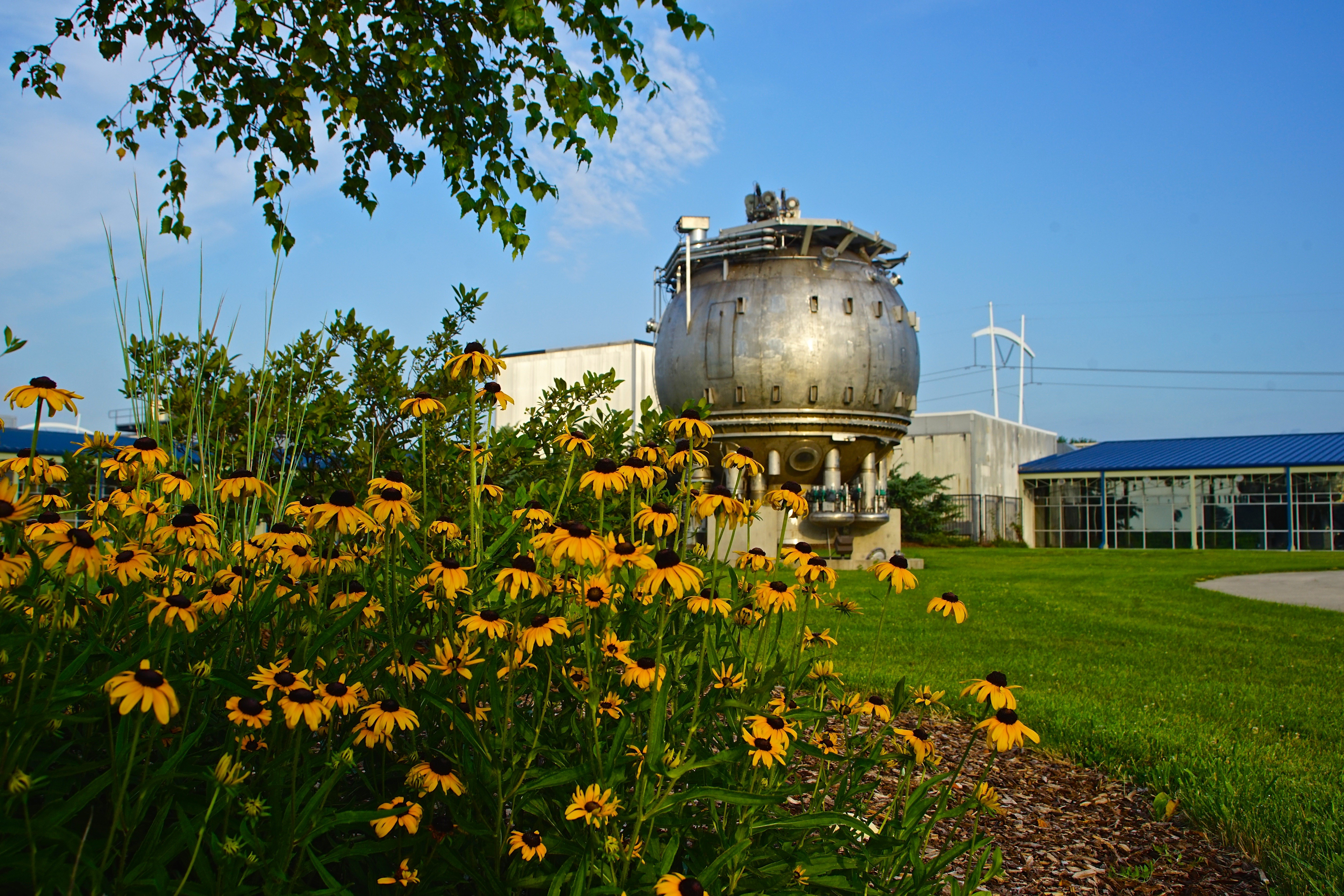 The 15-Foot Bubble Chamber located in SiDet's courtyard is possibly the largest lawn ornament on Fermilab's 6,800 acres — a marvel to behold, especially when set off by brown-eyed susans. Photo: Leticia Shaddix