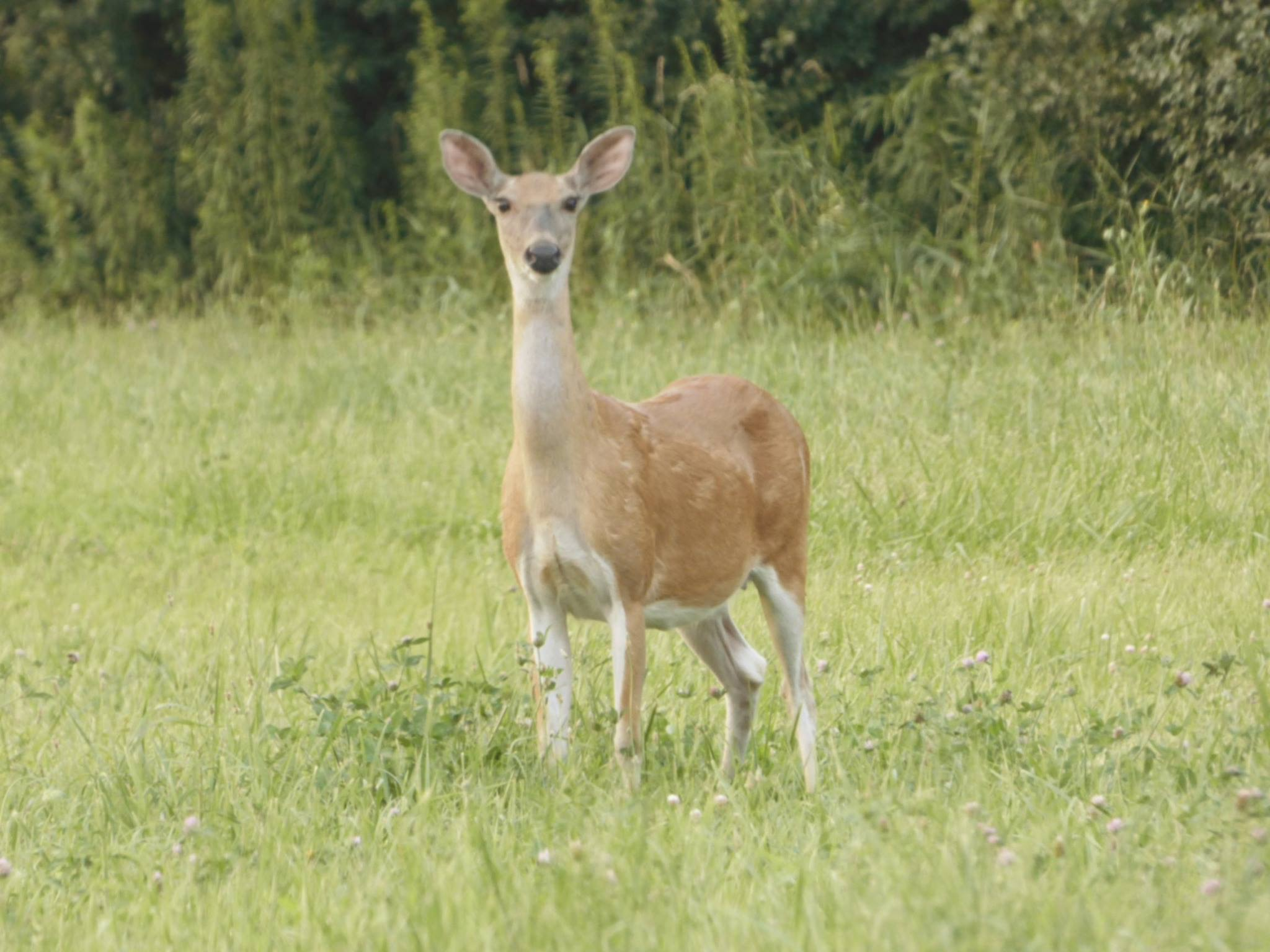 This deer was spotted by B Road. Photo: Amy Scroggins