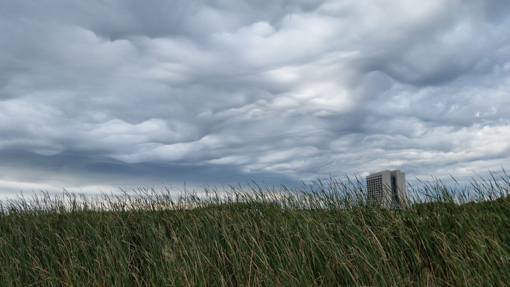 Clouds covered Chicagoland on Thursday, including the tall grass of the prairie. Photo: Josh O'Connell, AD