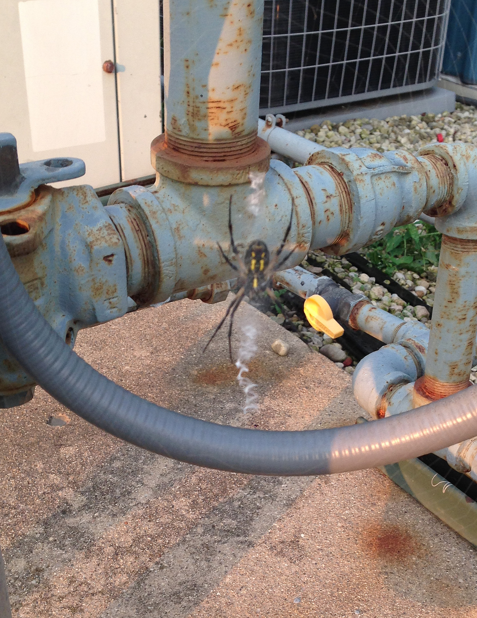 A spider hangs out during a recent gas meter reading at Site 39. Photo: Al Wywialowski, FESS