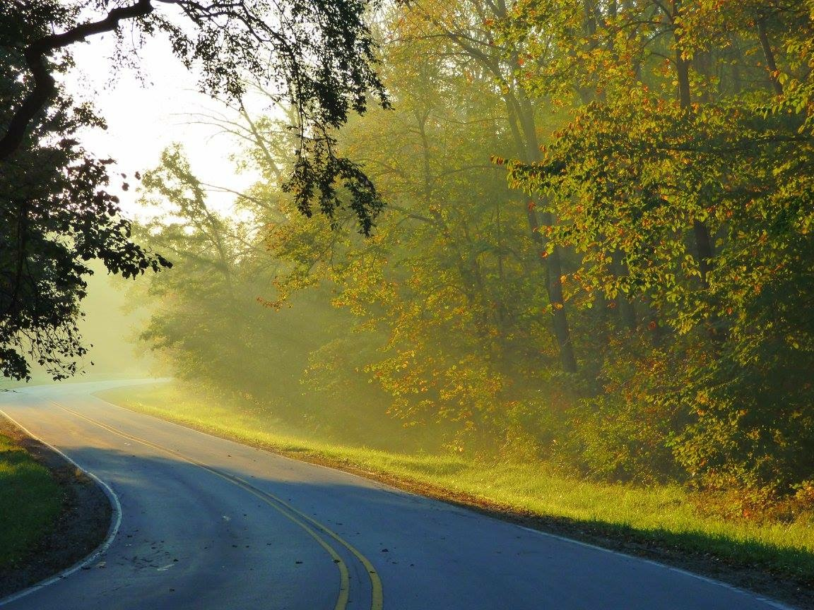 This Fall Friday photo may not depict the actual road to paradise, but the way the sun's rays stream across the street, you could be forgiven for thinking you were on the path to wonderland. Photo: Amy Scroggins