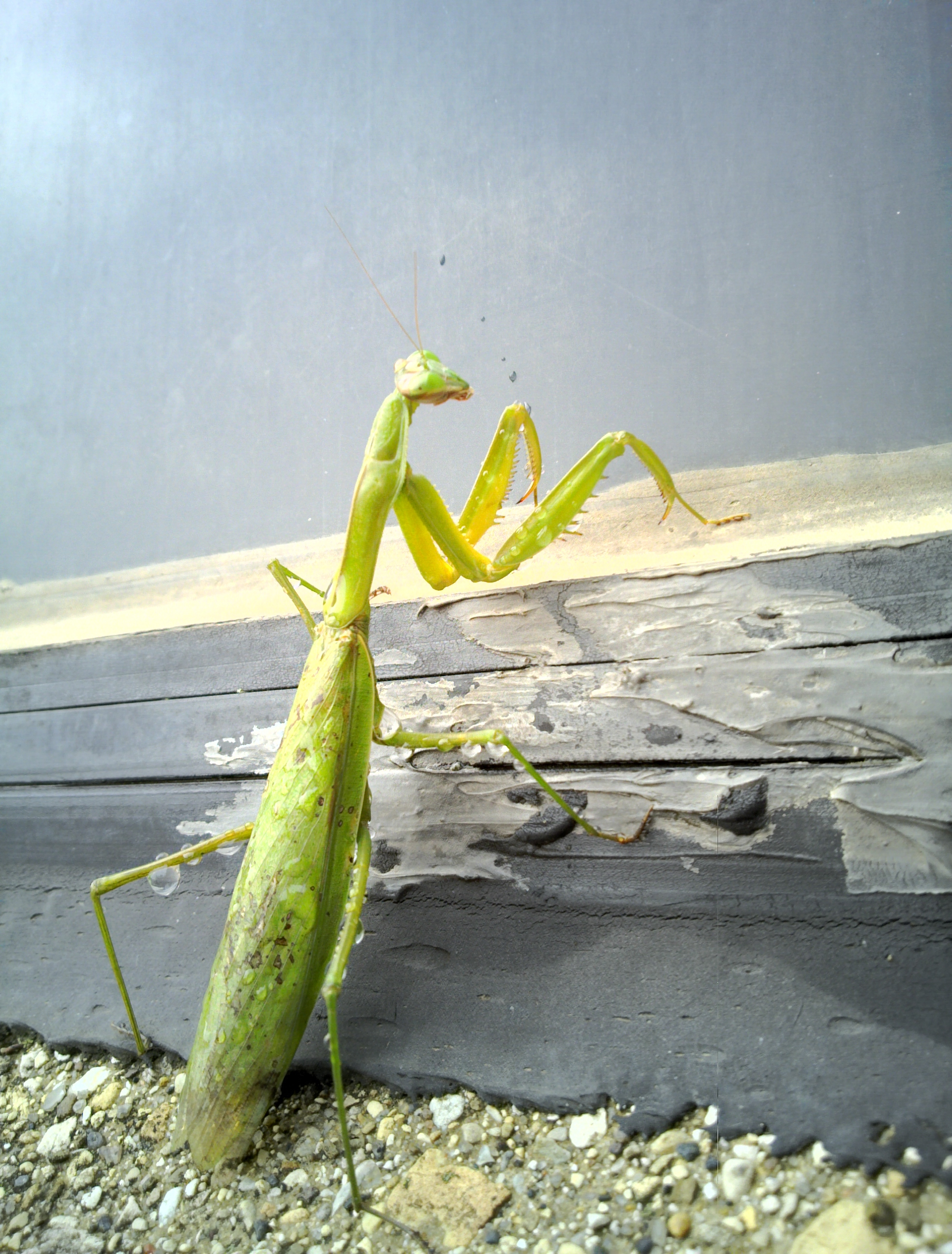 A praying mantis outside the Main Control Room tries to dry off after a rainfall. Photo: Michael Vincent