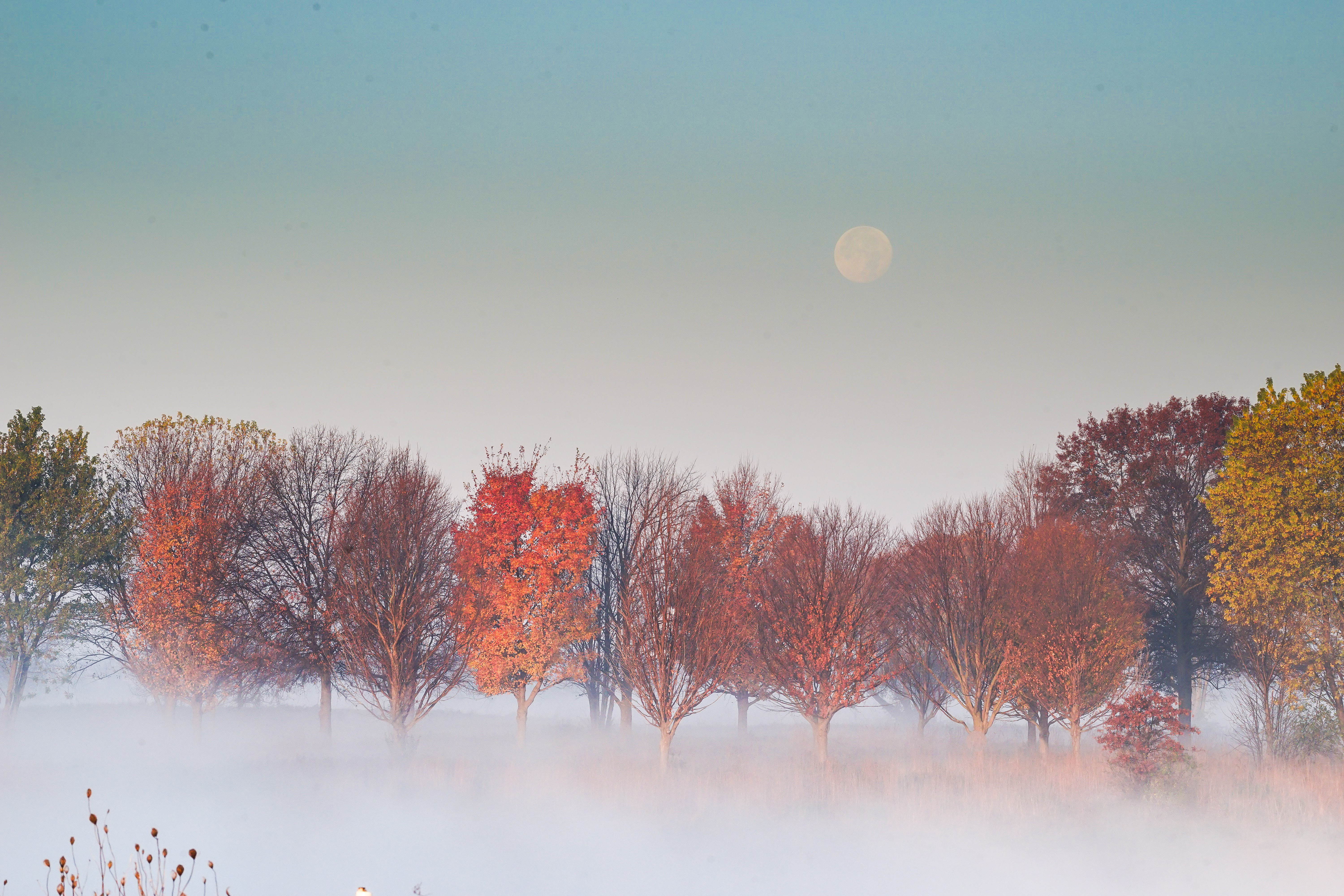 The trees reveal their beautiful colors against the November morning fog. Photo: Leticia Shaddix