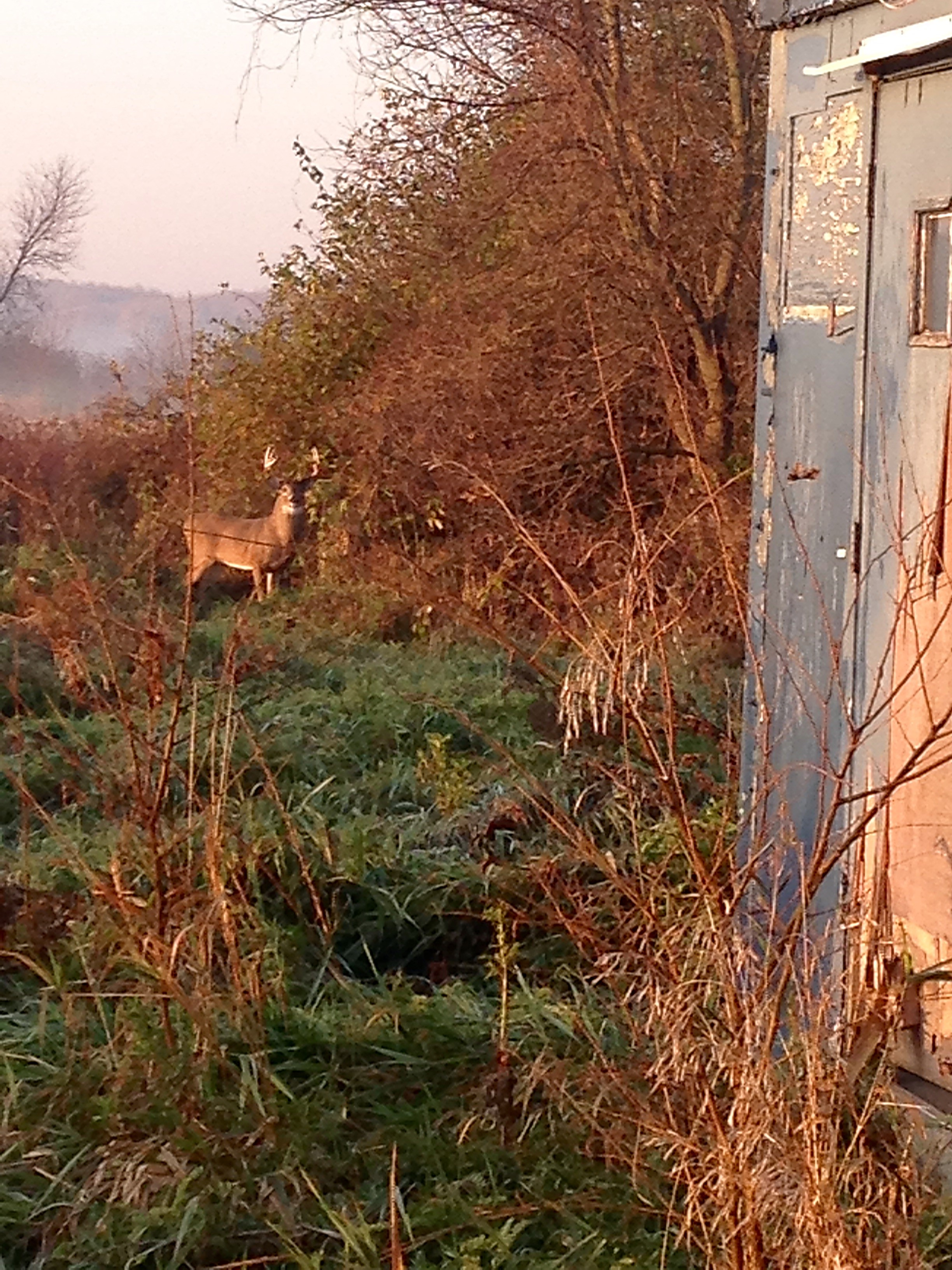 This beautiful 6 point buck greeted Railhead employees the morning of Nov. 15. Photo: Erik Bainbridge