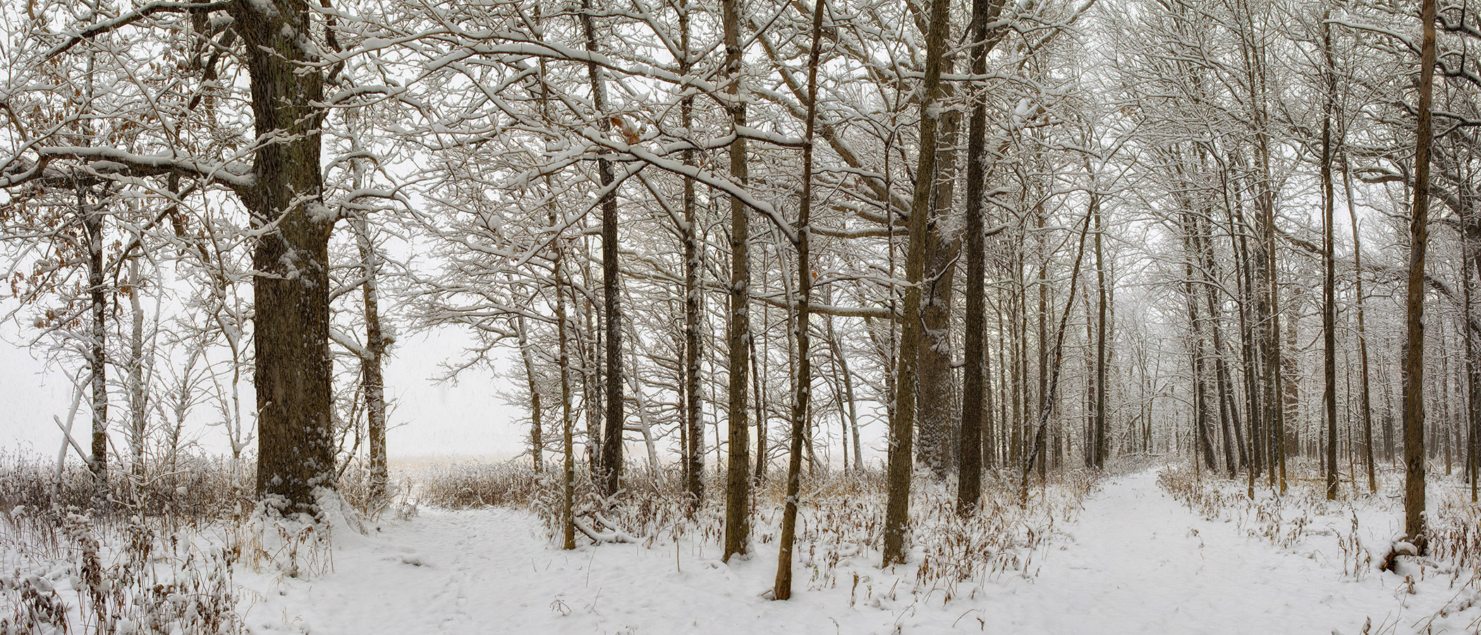 Happy new year! The snow-laden branches and strong, slender tree trunks of the woods around Fermilab create a calming setting to walk around in. Photo: Marty Murphy