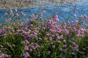 nature, water, plant, flower