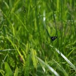 nature, wildlife, animal, insect, butterfly, grass, plant