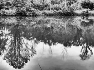 nature, woods, water, pond, tree, plant