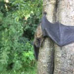 animal, mammal, bat, nature, wildlife