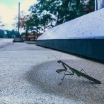 praying mantis, insect, bug, nature, wildlife, animal