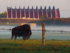 bison by the meson building, nature, wildlife, animal, mammal, bison, building