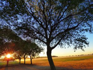 early morning landscape with trees and sun, sun, tree, landscape, prairie, fall, sky