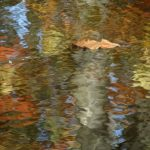 """Fallen leaf and reflections"" by Gordon Koizumi"