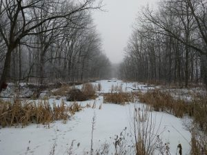 Throwback Thursday: The waterway between Lederman Science Center and Wilson Hall is covered in snow. winter, snow, woods, tree, nature, landscape, plant, sky Photo: Jason St. John