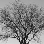 You see branching forms similar to this throughout nature — in trees, rivers, lightning, ice crystals — almost everywhere. Photo: Amy Scroggins, nature, plant, tree, winter, sky