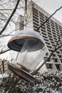 Throwback Thursday: The wind and the snow have put this bird feeder into a rather odd position. nature, building, Wilson Hall, wildlife, bird Photo: Elliott McCrory