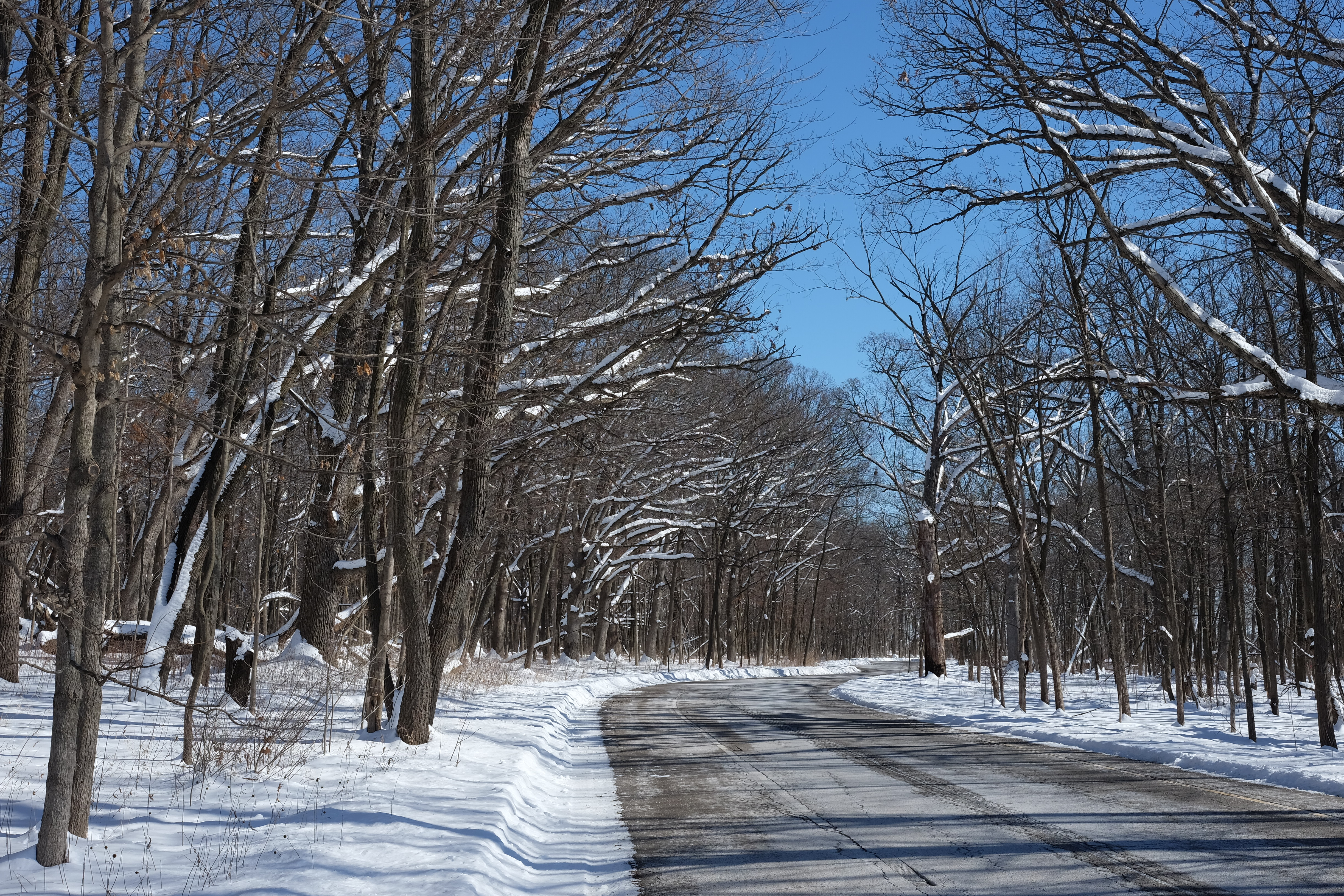 (1/2) Snow sharpens the silhouettes of trees in winter. Photo: Daniel Munger, winter, woods, snow, tree, nature, landscape