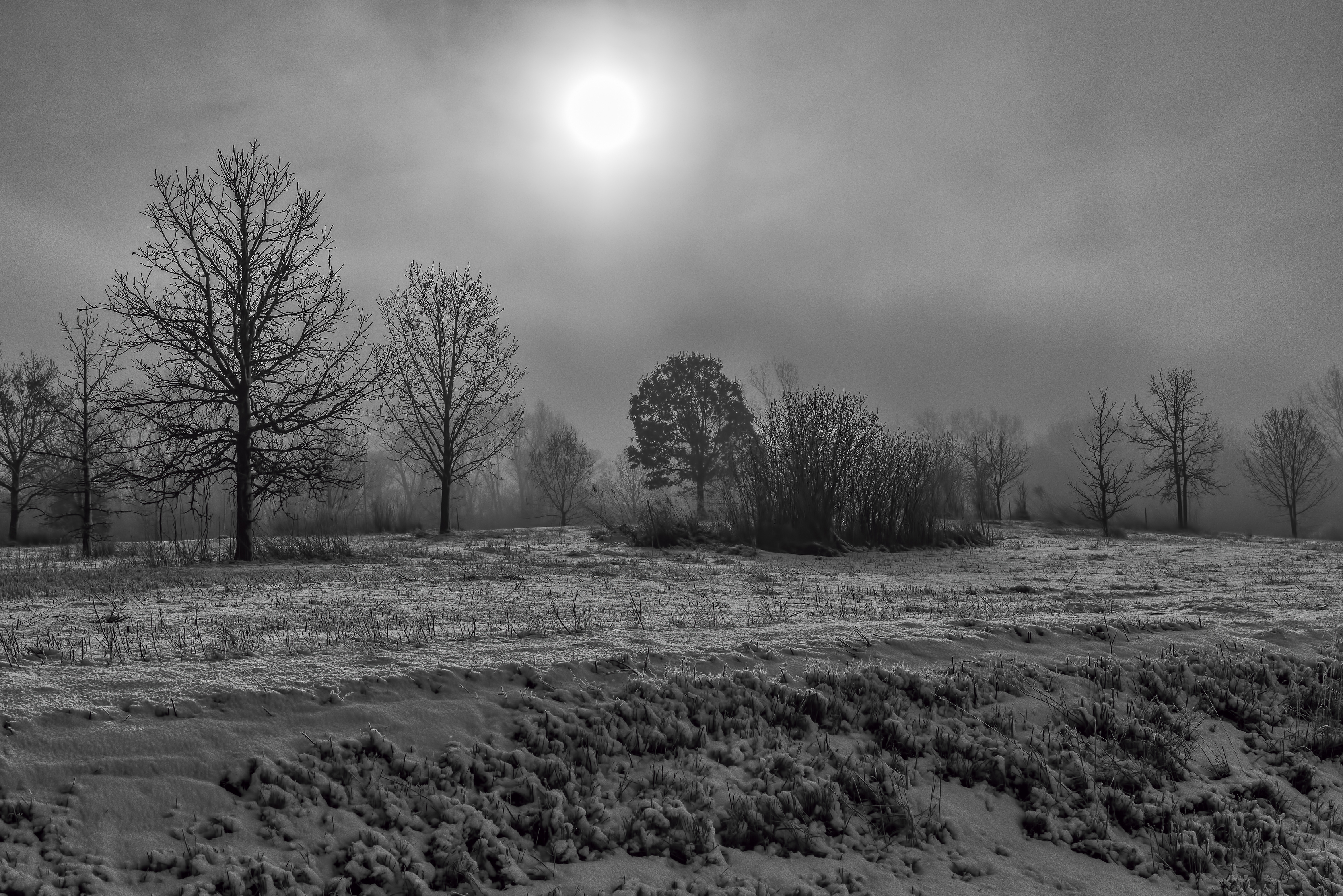 (2/2) The sun shines through the thick fog. Photo: Tim Chapman, landscape, nature, winter, snow, fog, sun, sky, tree