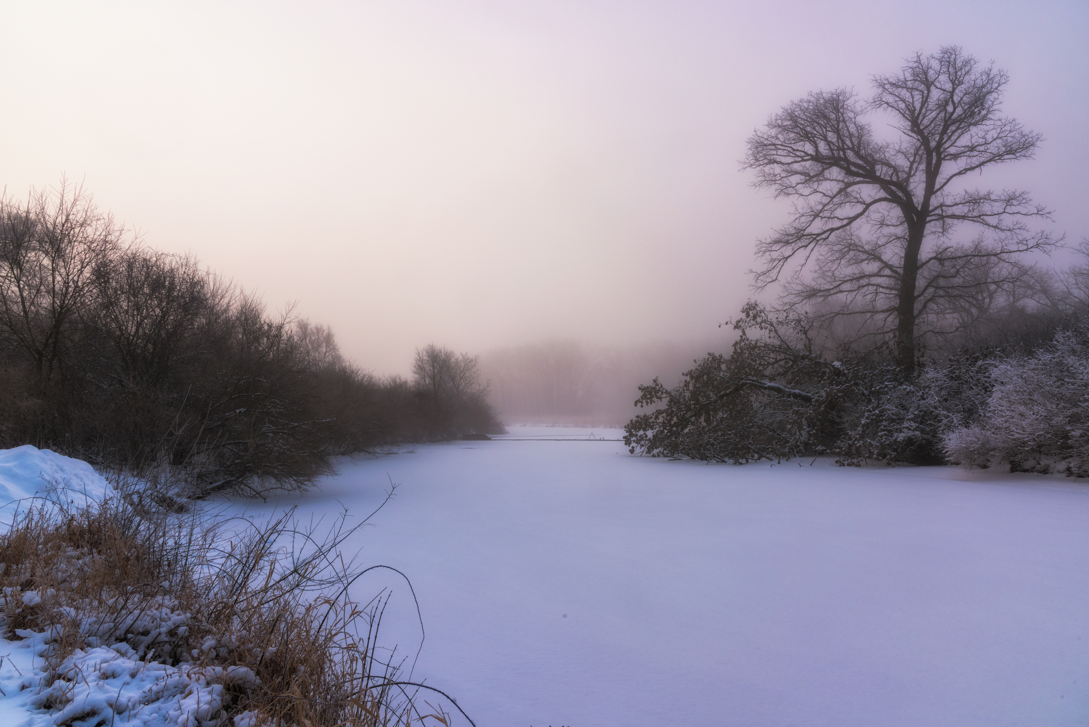 (1/2) Snow covers a pond on a foggy morning. Photo: Tim Chapman, landscape, winter, snow, pond, fog, tree