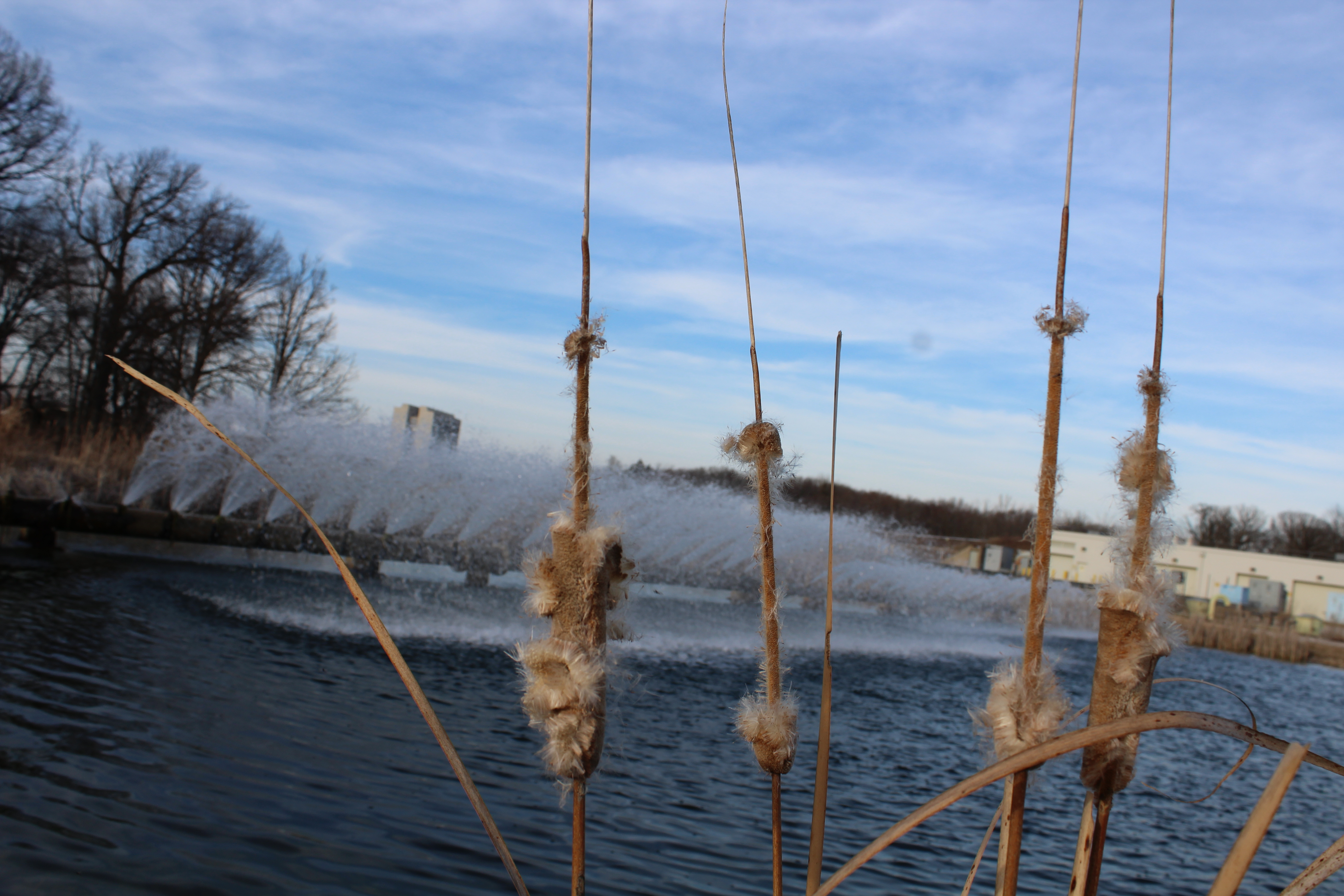 (3/4) On the same day the coyote was photographed, March 18, the Main Injector water jets were spraying into the pond. Photo: Zoe Toliopoulos Sherwin, Main Injector, water, pond