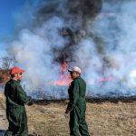 Ryan Campbell (left) and Martin Valenzuela tend to a controlled burn at the Pine Street entrance. nature, prairie, fire, burn, ecology, people