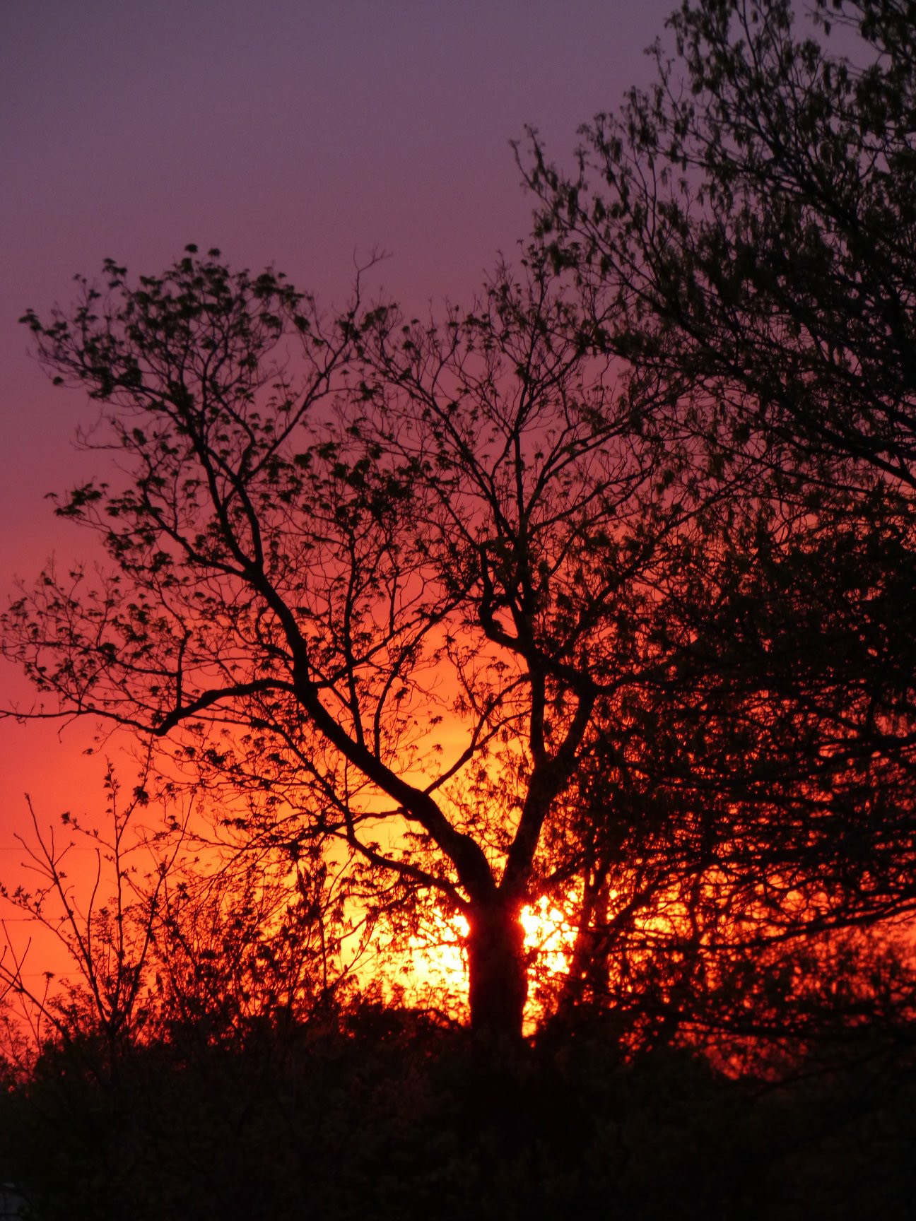 (2/3) A beautiful sky shows off trees on site. Photo: Amy Scroggins, landscape, nature, sky, sun, sunset, tree