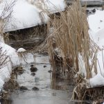 Flashback to a January day when the creek flowed in between banks of snow. winter, snow, water Photo: Barb Kristen