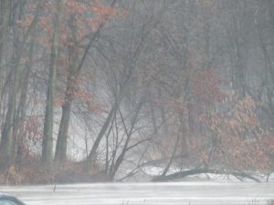 Throwback to February, when this morning fog settled between Swan Lake and Kidney Pond. nature, fog, landscape, woods, tree, snow, winter Photo: Barb Kristen